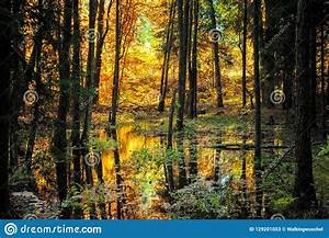 Typical, Golden, Autumn, Scene, Stock, Image
