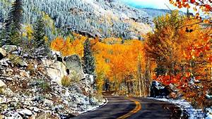 Road, Between, Colorful, Autumn, Trees, And, White, Covered, Stone, Hd, Nature, Wallpapers
