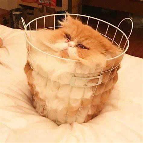 funny pictures  show cats  liquid top