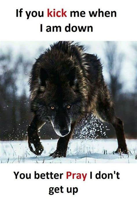 The 25 Best Wolf Quotes Ideas On Pinterest Lone Wolf