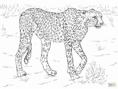 Ausmalbilder Gepard Cheetah Coloring Ausmalbild Zum Ausdrucken