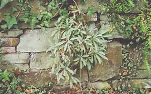 Pflanzen Für Trockenmauer : trockenmauern ~ Orissabook.com Haus und Dekorationen
