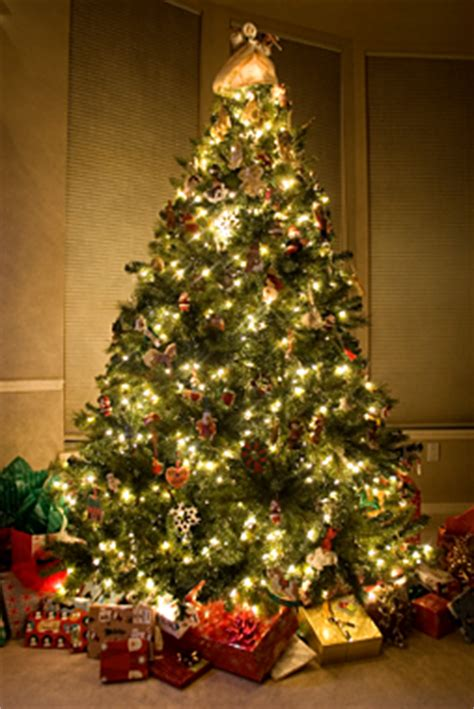 christmas tree delivery nyc manhattan fresh cut christmas trees delivered