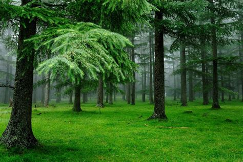 20 Forest Backgrounds