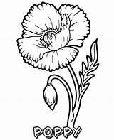 Coloring Poppy Flower Flowers Blooming sketch template