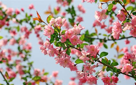 Flower Background Flowers Wallpapers And Background Images Stmed Net