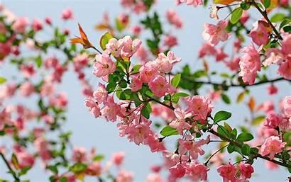 Flower Wallpapers Flowers Desktop 1280 800 Backgrounds