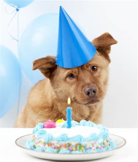 ultimate guide  dog birthday cake recipes paw nation