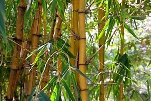 Bambou A Planter : quel bambou planter dans votre jardin ou sur votre ~ Premium-room.com Idées de Décoration