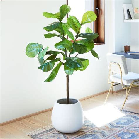 faux fiddle leaf fig plant west elm