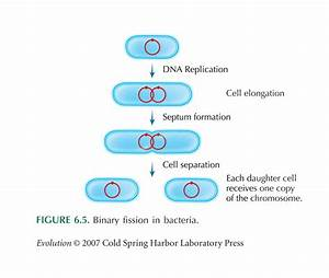 Structure Of Bacteria Part 4 Nutrition Of Bacteria  F Sc