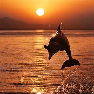 20 lugares en el mundo donde ver delfines Vuelos baratos