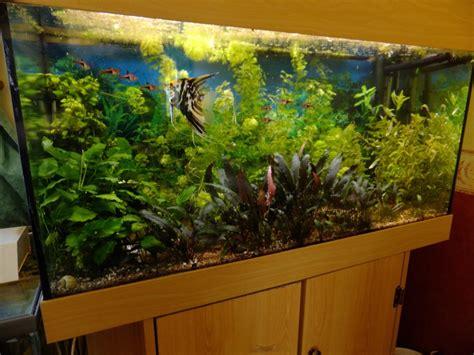 aquarium plante sans substrat 28 images plantes sans substrat d 233 coration plante grasse