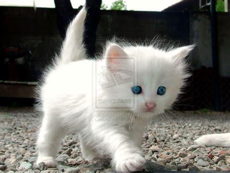 Angora Rabbit, Cats And Kittens, Animals Cats, Cats