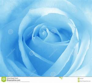 Soft blue rose stock illustration. Image of abstract ...