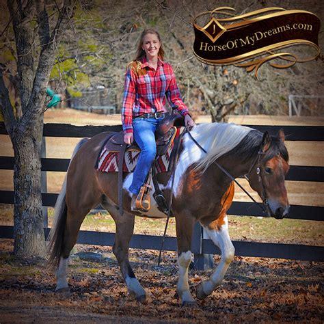 draft paint horse cross trail henry gelding beginner horses reno