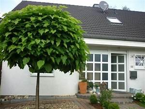 Baum Vorgarten Immergrün : hausfassade au enansichten 39 vorgarten aktuell 39 jolie ~ Michelbontemps.com Haus und Dekorationen
