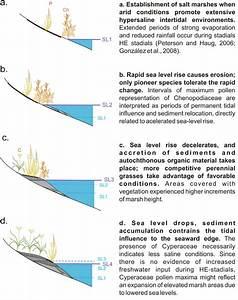 Schematic Representation Of Salt Marsh Community Dynamics