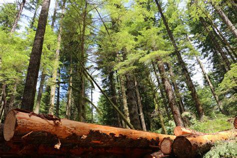 forests  woodlands bureau  land management