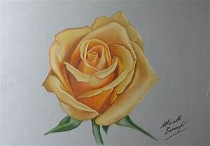 How I draw a yellow rose by Marcello Barenghi | HoW To DRaW