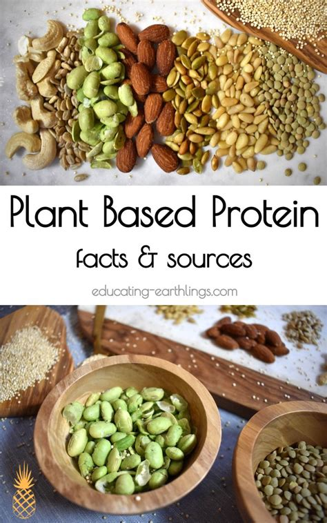 Best 25+ Vegan Protein Sources Ideas Only On Pinterest  Protein Sources For Vegans, Vegan