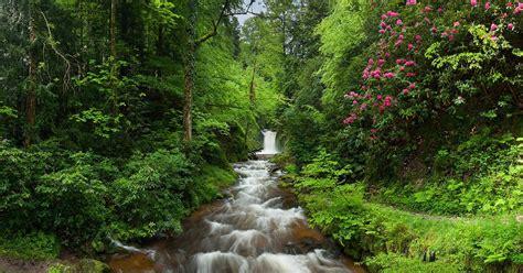 fond decran des arbres paysage cascade fleurs