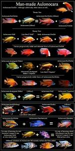 17 Best ideas about Aquarium Barsche on Pinterest ...