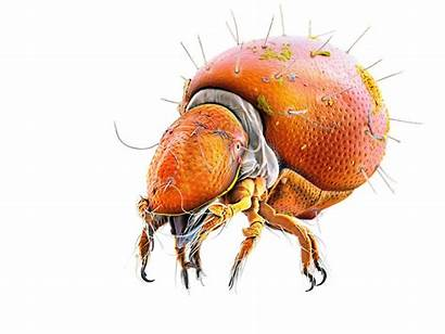 Creatures Weird Microscopic Monsters Oeggerli Nationalgeographic Proof