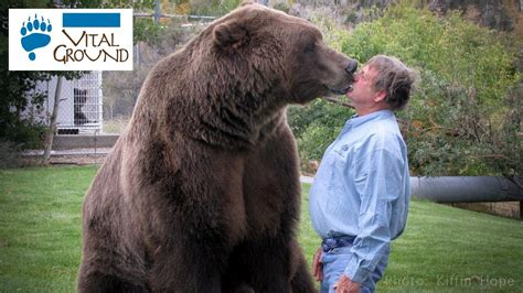 Largest Grizzly Bear Ever