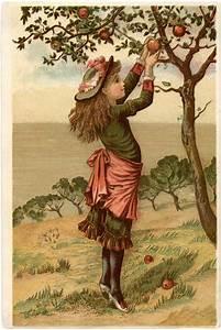 Vintage, Apple, Picking, Image