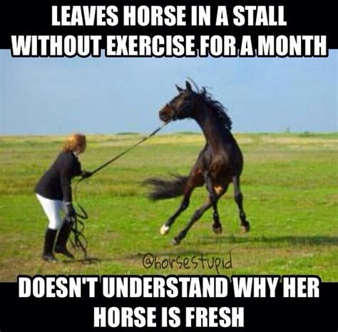 Horse Memes - 11 best horse memes images on pinterest horses horse and meme