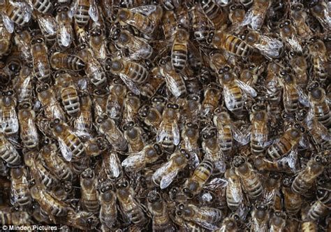 Person Attacked by Killer Bees
