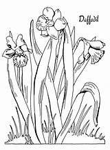 Coloring Printable Pages Daffodil Daffodils Fairy Flower Drawing Graphics Flowers Clipart Sheets Books Thegraphicsfairy Line Colouring Floral Adult Graphicsfairy Spring sketch template