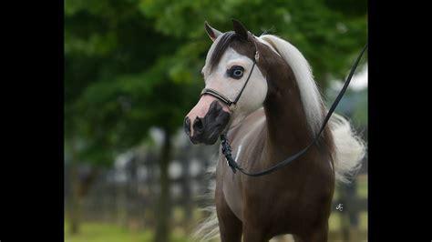 horse miniature american amazing