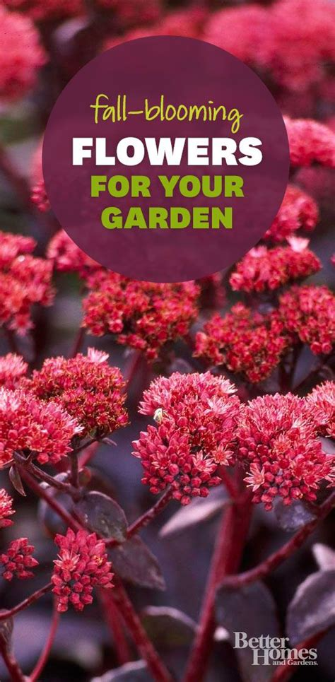 17 best images about flower bed ideas on
