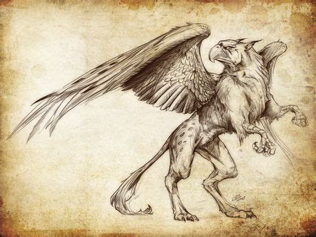 pics  gryphon concept art drawing gryphon tattoo