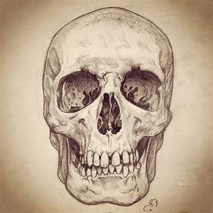Pencil sketch of human skull   Art   Pinterest   Human ...