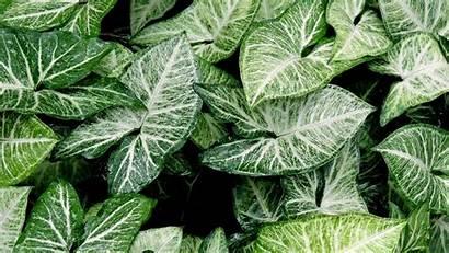 Plant Desktop 4k Wallpapers Sfondi Leaves Piante