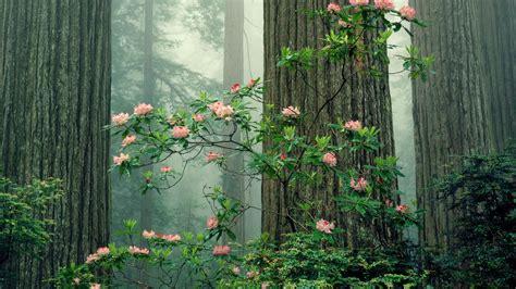 Sequoia National Park Wallpaper Wallpapersafari