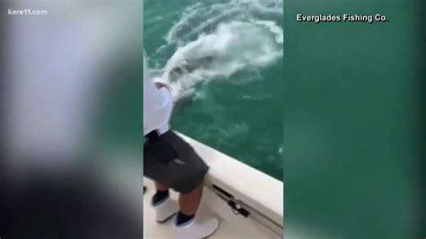 grouper shark goliath eats bite