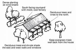 Shading A Diagram Shows How Plants Can Provide Shade And