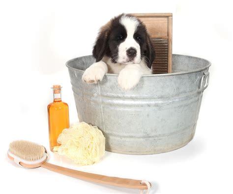 comment toiletter un chien comment laver un chien