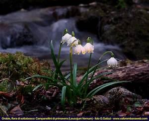 Fiori di Montagna Orobie