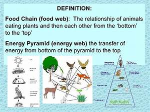 1st Relationships  U0026 Food Chains  Notes On Energy Flow