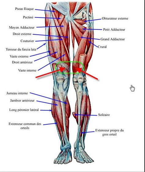 *click them to make them larger & view details. Leg Muscle Fatigue Question