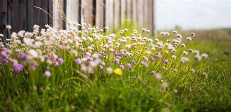 Garten Nachhaltig Gestalten by Naturgarten Was Er Ist Was Er Kann