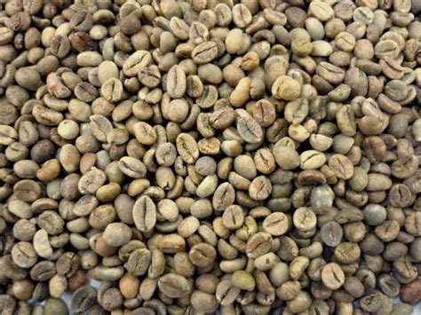 Washed Robusta Coffee Beans Scr 16 Coffee Tables For Sale At Ikea Arabic Nutritional Value Metal Table Ottomans With Cardamom Recipe Legs Cheap Modernist Next Frame Dimensions Cork