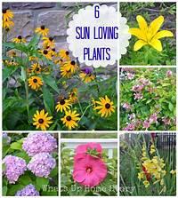 sun loving shrubs Garden Talk - 6 Sun Loving Plants | Gardens, Sun and Flag ...