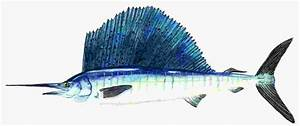 Fish Note Cards, Sport Fish Greeting Cards, Fish Art and ...