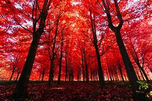 Why, Do, Leaves, Change, Color, U2014and, Everything, Else, You, Need, To, Know, About, Fall, Foliage
